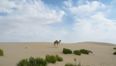Что такое Аравийское лето?