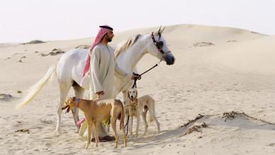 Арабские скакуны.