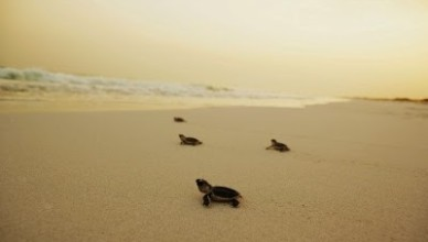 Черепахи в городе!