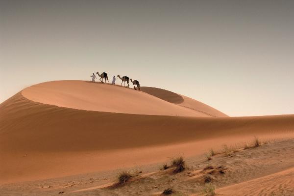 camels-600x399