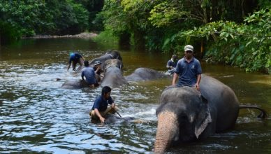 Летние путешествия: Куала Лумпур. Купание со слонами.