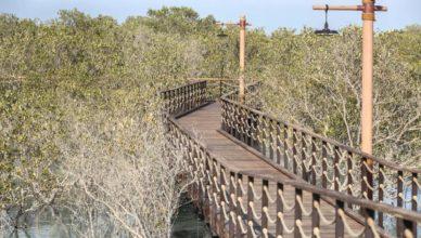 Мангровый парк — знакомство с местной природой